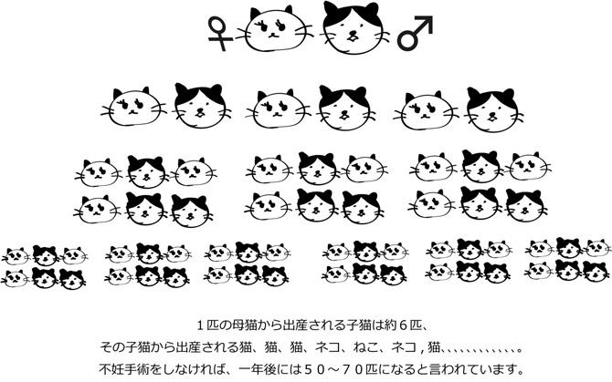 一匹の母猫から出産される子猫は約6匹、その子猫から出産される猫、猫、猫、ネコ、ねこ、ネコ、猫、、、、、、、、、。不妊手術をしなければ、一年後には50~70匹になると言われています。